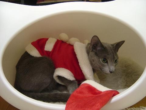 サンタのお部屋(2008.12.19)