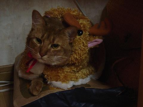 ジョゼトナカイ(2008.12.19)