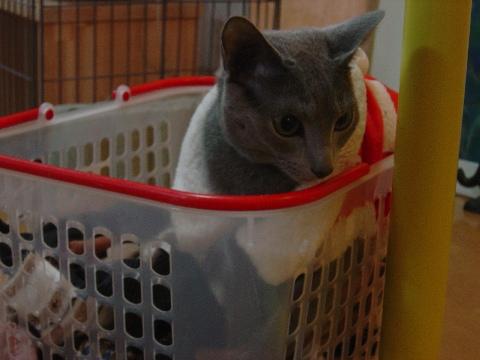 ニコサンタ(2008.12.19)