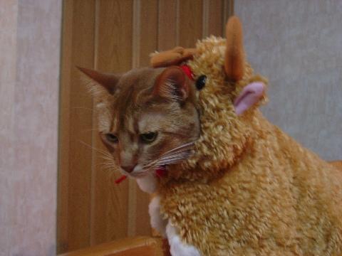ジョゼトナカイ、かわいい♪(2008.12.19)