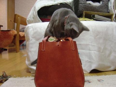 一生懸命02(2008.12.20)