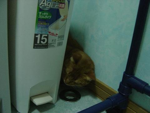 お風呂はやーなのよっ(2008.12.21)