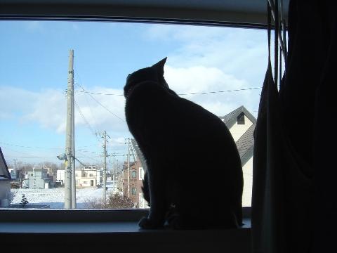 ニコライの窓-12月01(2008.12.23)