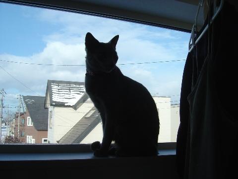 ニコライの窓-12月02(2008.12.23)