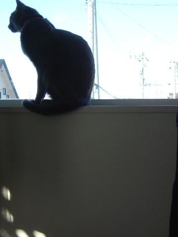 ニコライの窓-12月04(2008.12.23)