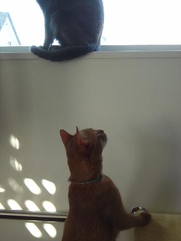 ニコライの窓-12月05(2008.12.23)