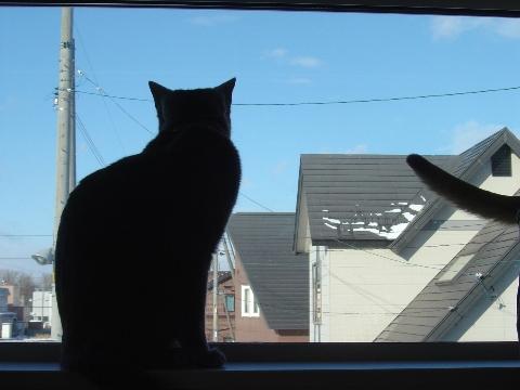 ニコライの窓-12月07(2008.12.23)