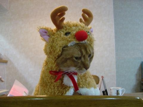 おにーにゃん、こないなのよっ(2008.12.24)