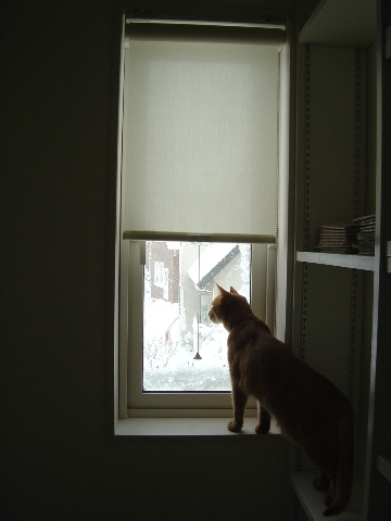 今日も雪なのよっ(2008.12.27)