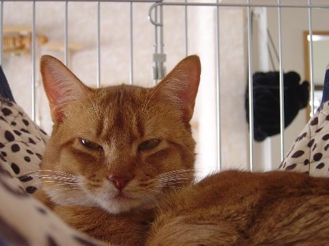 ニャンモックでジョゼ01(2008.12.28)
