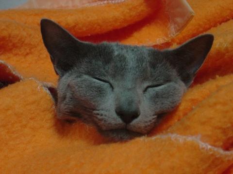 埋もれて寝ちゃいました(2008.12.28)