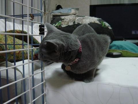 新入りにゃ(2009.01.05)