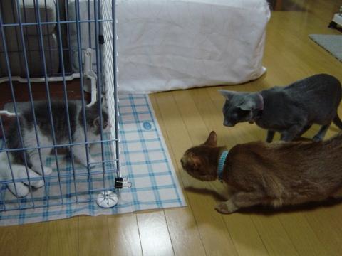 よく見るなのよっ(2009.01.05)