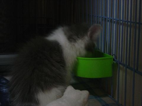 もぐもぐフレイヤ(2009.01.06)