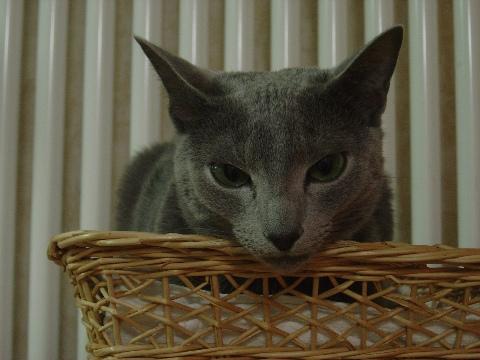 メンドクサイにゃ(2009.01.06)