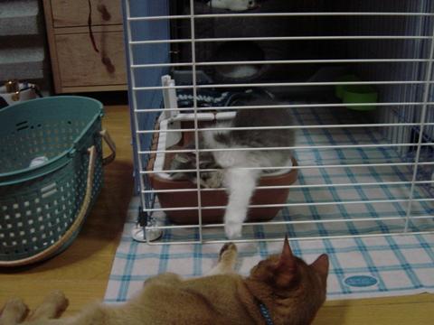 握手する姉妹(2009.01.07)