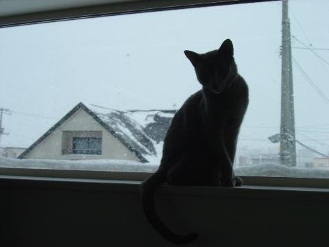 雪と二コ(2009.01.11)