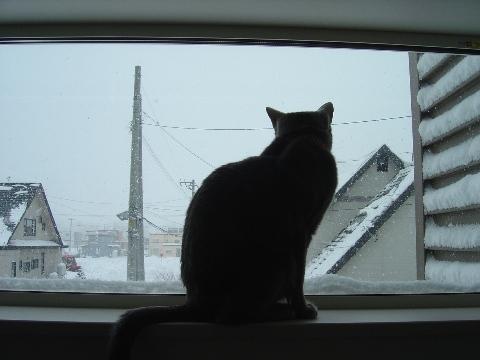 ニコライの窓、冬、お外見(2009.01.11)