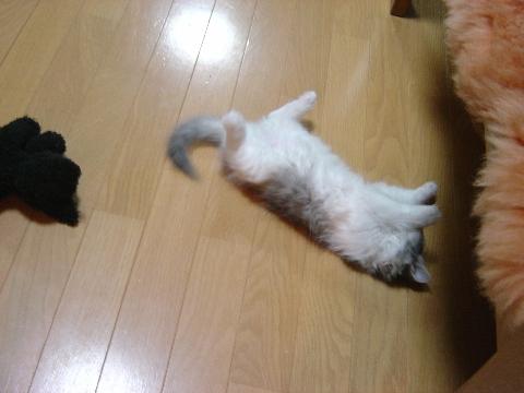 泣くフレイヤ(2009.01.12)