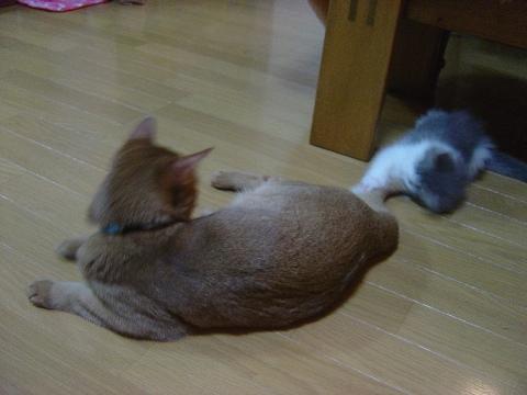 しっぽで遊ぶでしゅ(2009.01.13)