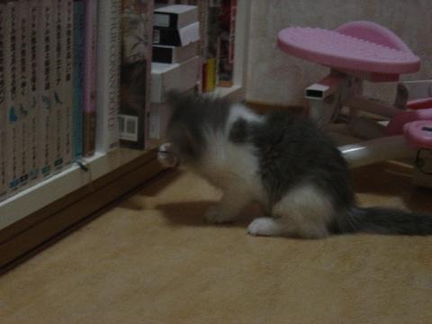 しおり紐とフレイヤちゃん01(2009.01.14)
