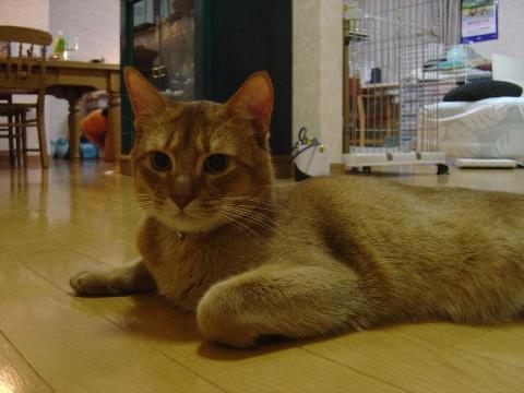 見守るジョゼフィンちゃん(2009.01.14)