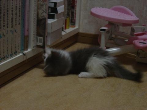 しおり紐とフレイヤちゃん02(2009.01.14)