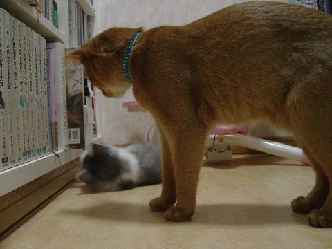 見かねたジョゼフィンちゃん(2009.01.14)