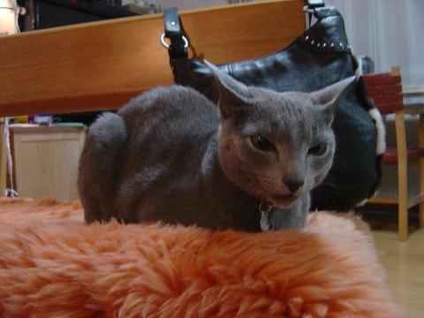 なぜかお耳シャキーン(2009.01.14)
