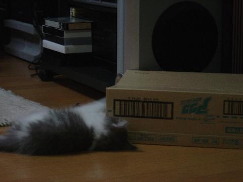 箱遊び01(2009.01.15)