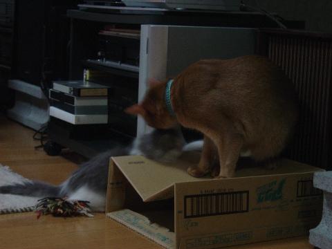 箱遊び02(2009.01.15)