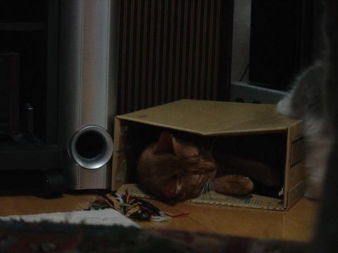 箱遊び05(2009.01.15)