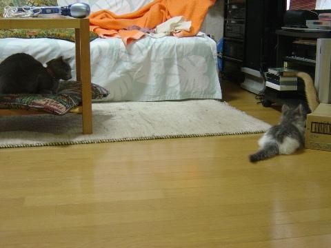 箱遊び06(2009.01.15)