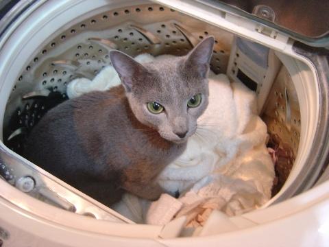 さよなら洗濯機01(2009.01.16)