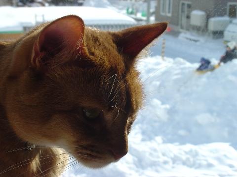 すごい雪でしょ(2009.01.17)