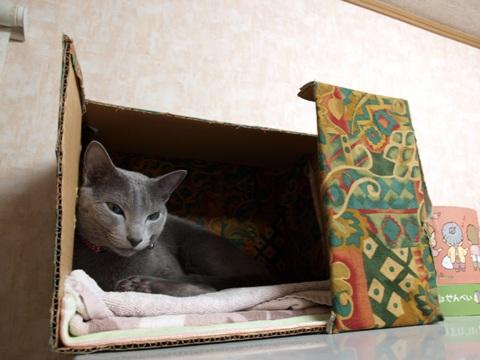 ジョゼフィンは忙しいんだにゃ(2009.01.22)