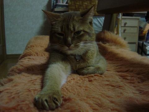 お手手12(2009.01.24)