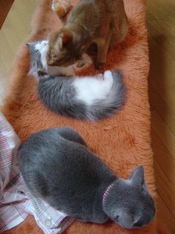 いっしょにムートン(2009.01.27)