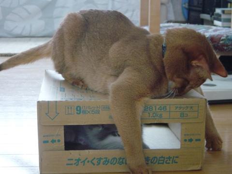 お手手11(2009.01.29)