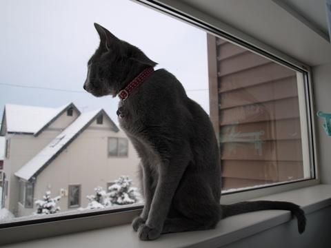 ニコライの窓で(2009.02.07)