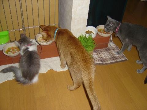 食事風景(2009.02.08)