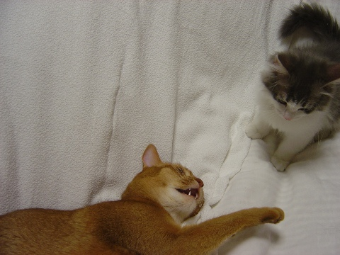 ベッドで遊ぶのよっ(2009.02.11)
