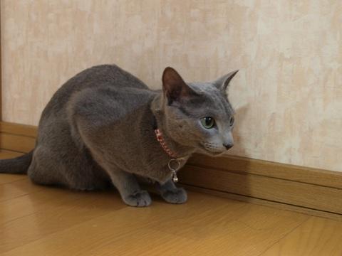 見上げるニコライ(2009.02.24)