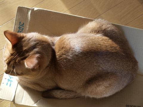 ジョゼの香箱上面図(2009.02.26)