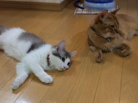 落ちてるふたり(2009.02.27)