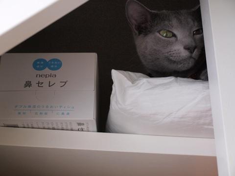 鼻セレブの隣にゃ(2009.02.28)