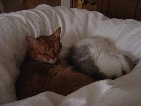 おはようジョゼフィン(2009.03.01)