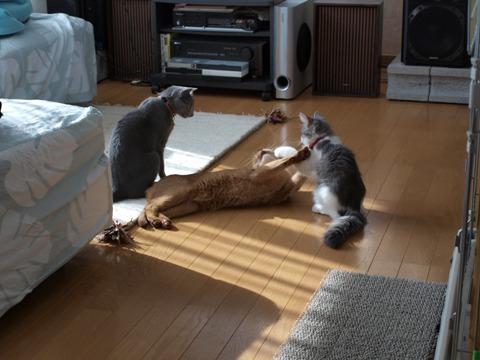 遊んでるの?(2009.03.04)
