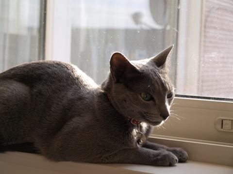 ランドリースペースの窓辺(2009.03.06)