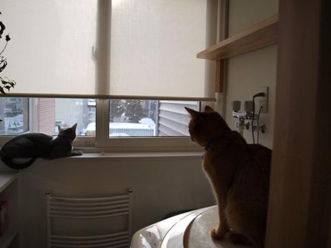静かな窓辺(2009.03.06)